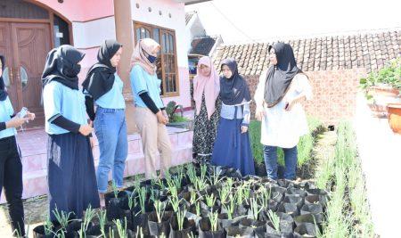 Mahasiswa KKN UM Sumbangkan 300 Bibit Tanaman Pangan untuk Desa Madiredo